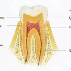 дентин