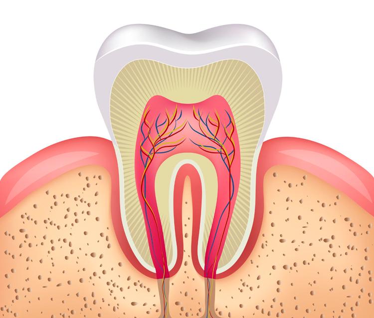 Надкостница зуба: строение, воспаление, лечение